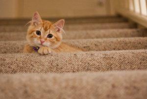 gatto e gravidanza